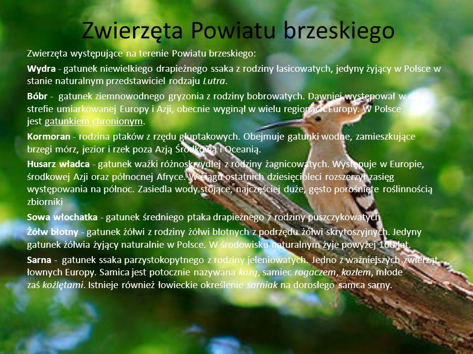 Zwierzęta Powiatu brzeskiego Zwierzęta występujące na terenie Powiatu brzeskiego: Wydra - gatunek niewielkiego drapieżnego ssaka z rodziny łasicowatyc
