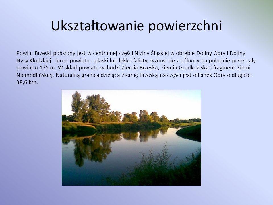 Obszary chronionego krajobrazu: Na terenie powiatu brzeskiego znajdują się fragmenty dwóch obszarów chronionego krajobrazu: Bory Niemodlińskie - obecnie obszar Borów Niemodlińskich to największy kompleks leśny w zachodniej części górnej Odry obejmujący powierzchnię 480 km² cennych przyrodniczo lasów będących pozostałością niegdysiejszej Przesieki Śląskiej, z wciąż jeszcze zachowanymi fragmentami typowych dla polskiego niżu lasów mieszanych i liściastych.