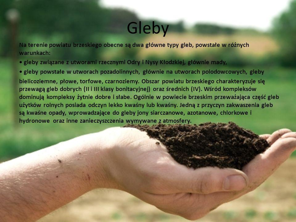 Gleby Na terenie powiatu brzeskiego obecne są dwa główne typy gleb, powstałe w różnych warunkach: gleby związane z utworami rzecznymi Odry i Nysy Kłod