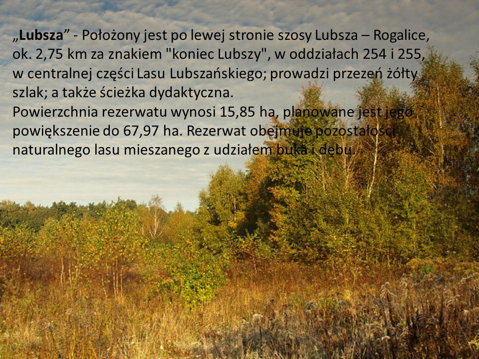 Lubsza - Położony jest po lewej stronie szosy Lubsza – Rogalice, ok. 2,75 km za znakiem