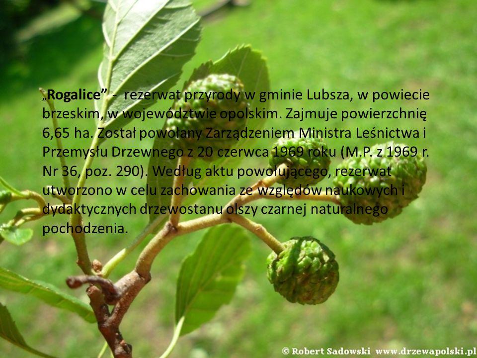 Rogalice - rezerwat przyrody w gminie Lubsza, w powiecie brzeskim, w województwie opolskim. Zajmuje powierzchnię 6,65 ha. Został powołany Zarządzeniem
