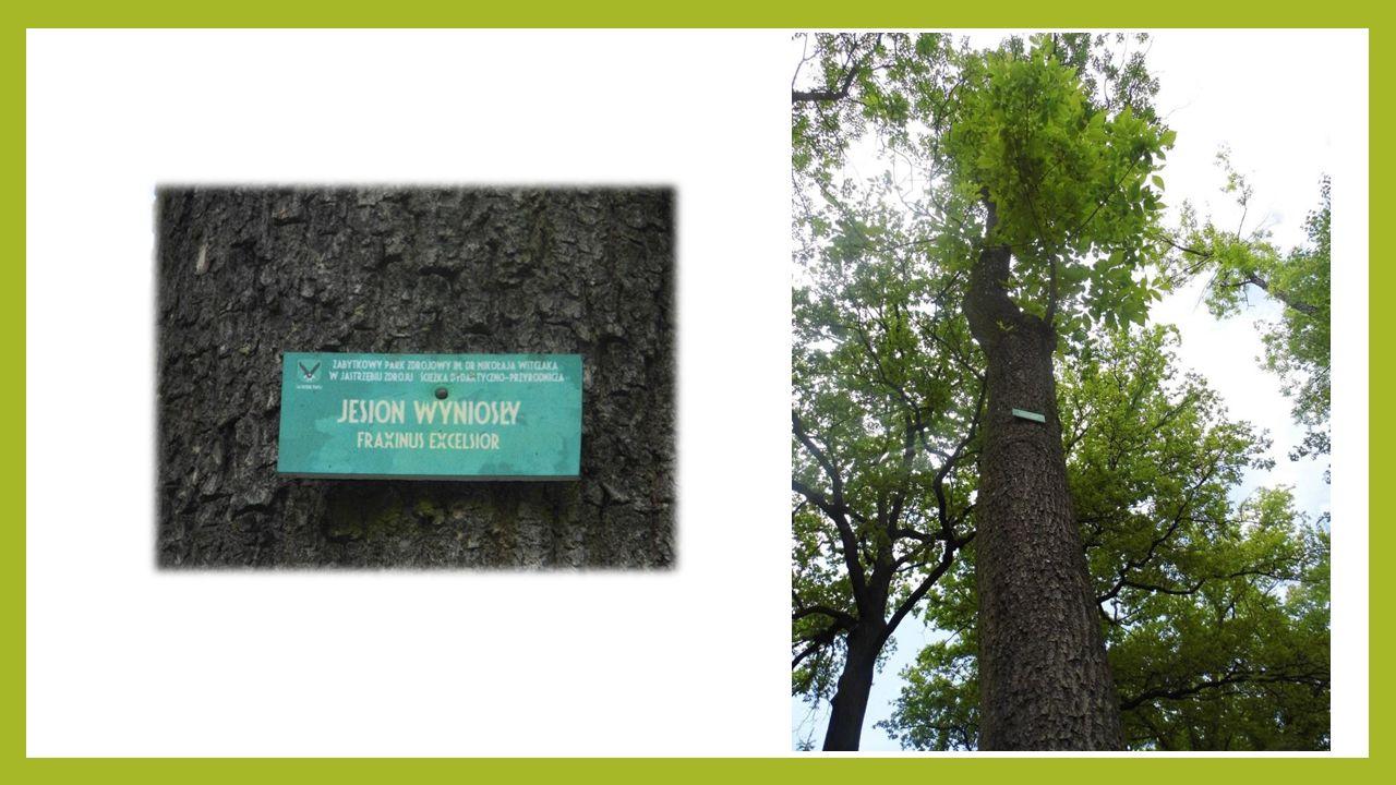 Park Zdrojowy jest również miejscem, w którym regularnie odbywają się koncerty, spektakle dla dzieci i inne wydarzenia kulturalne.
