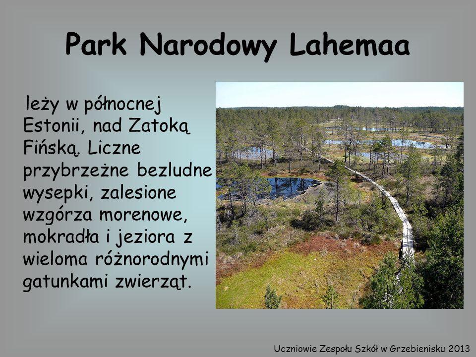 Park Narodowy Lahemaa leży w północnej Estonii, nad Zatoką Fińską. Liczne przybrzeżne bezludne wysepki, zalesione wzgórza morenowe, mokradła i jeziora