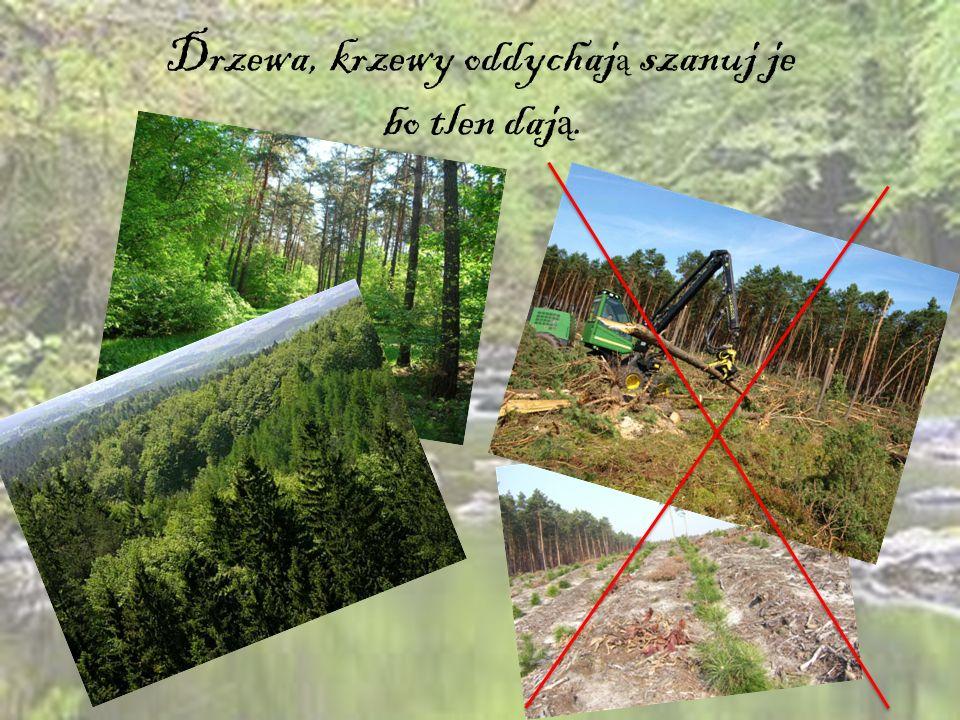 Drzewa, krzewy oddychaj ą szanuj je bo tlen daj ą.