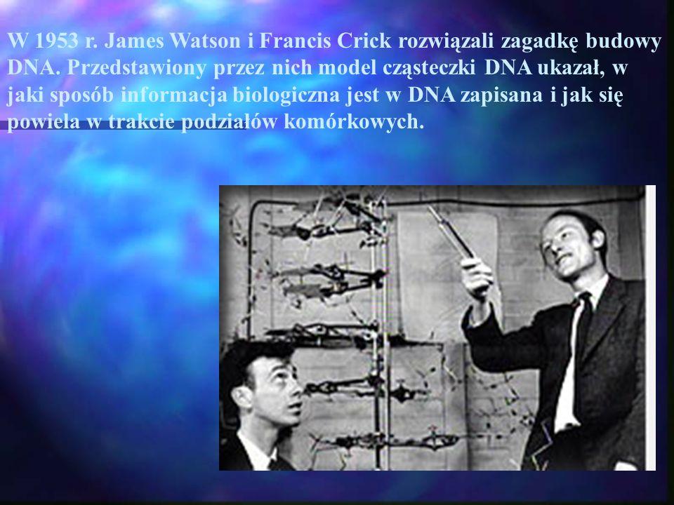 W 1953 r. James Watson i Francis Crick rozwiązali zagadkę budowy DNA. Przedstawiony przez nich model cząsteczki DNA ukazał, w jaki sposób informacja b