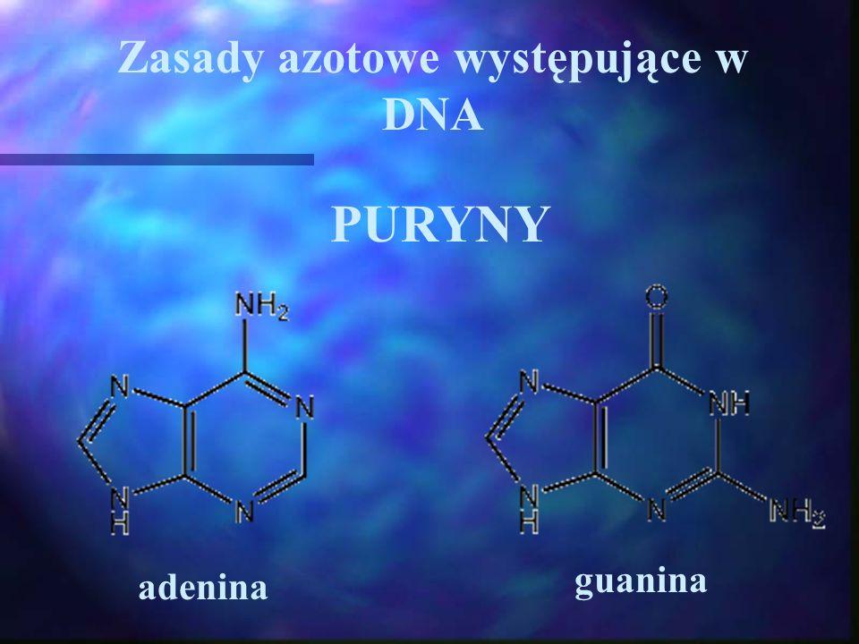 Zasady azotowe występujące w DNA PURYNY adenina guanina