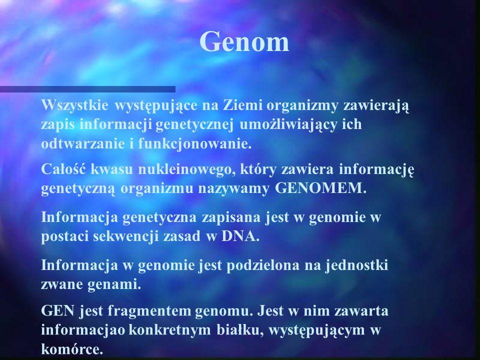 Genom Wszystkie występujące na Ziemi organizmy zawierają zapis informacji genetycznej umożliwiający ich odtwarzanie i funkcjonowanie. Całość kwasu nuk