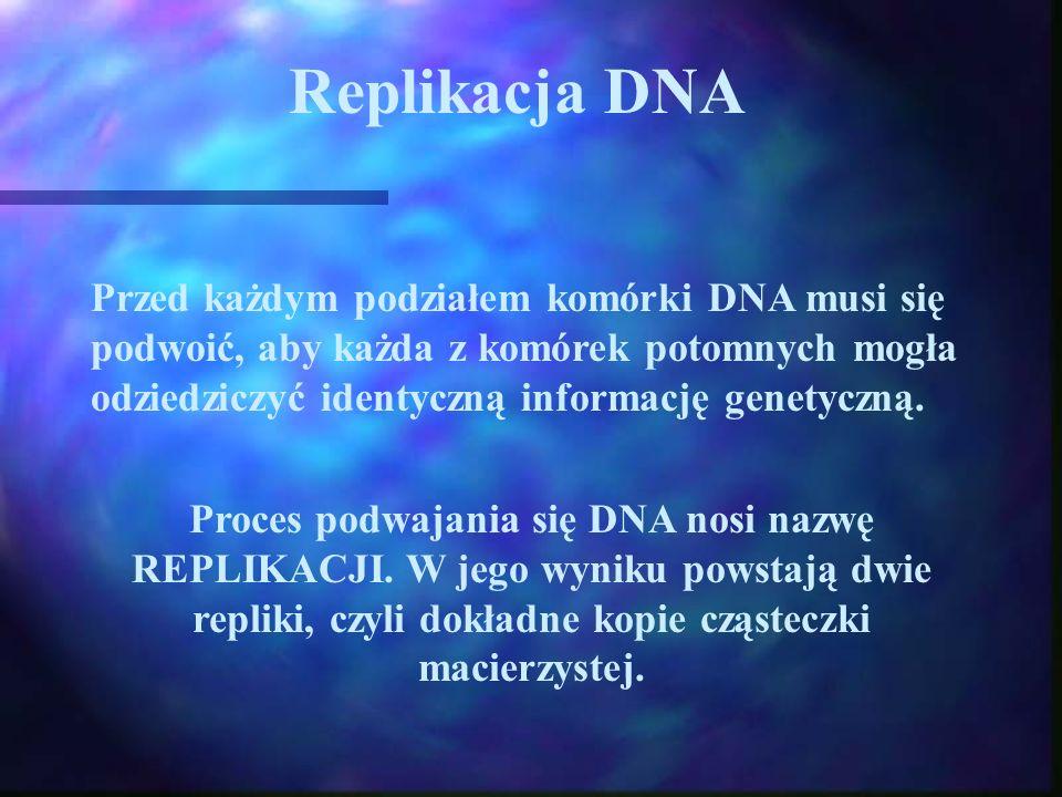 Replikacja DNA Przed każdym podziałem komórki DNA musi się podwoić, aby każda z komórek potomnych mogła odziedziczyć identyczną informację genetyczną.