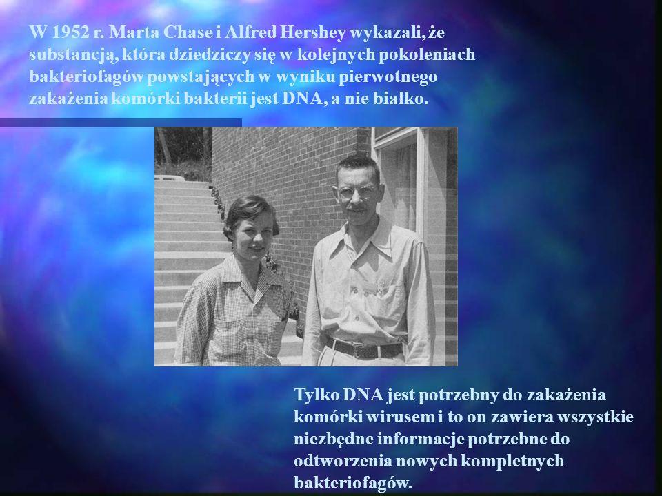 W 1952 r. Marta Chase i Alfred Hershey wykazali, że substancją, która dziedziczy się w kolejnych pokoleniach bakteriofagów powstających w wyniku pierw