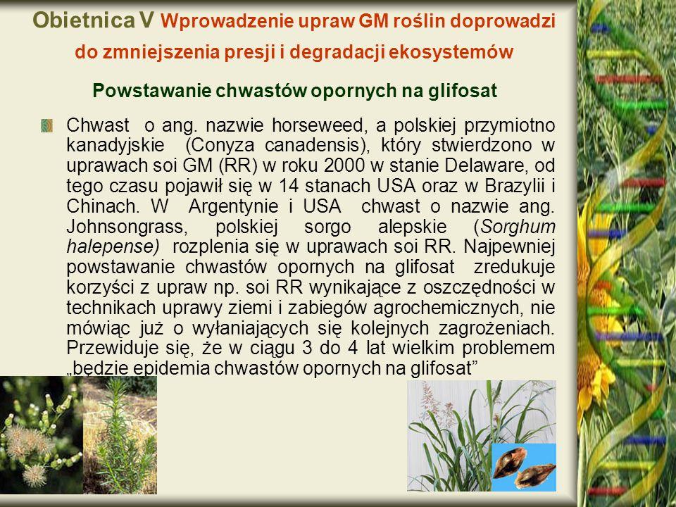 Obietnica V Wprowadzenie upraw GM roślin doprowadzi do zmniejszenia presji i degradacji ekosystemów Powstawanie chwastów opornych na glifosat Chwast o