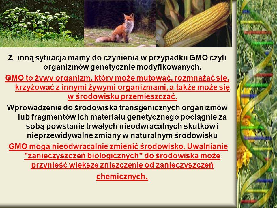 . Z inną sytuacja mamy do czynienia w przypadku GMO czyli organizmów genetycznie modyfikowanych. GMO to żywy organizm, który może mutować, rozmnażać s