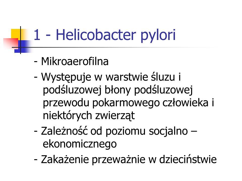 1 - Helicobacter pylori - Mikroaerofilna - Występuje w warstwie śluzu i podśluzowej błony podśluzowej przewodu pokarmowego człowieka i niektórych zwie