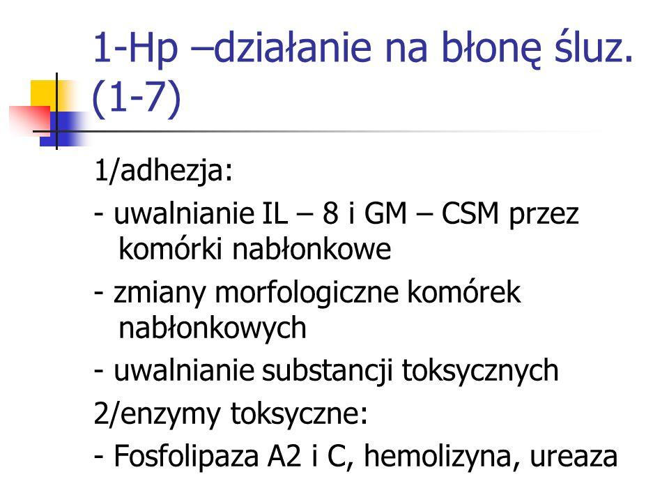 1-Hp –działanie na błonę śluz. (1-7) 1/adhezja: - uwalnianie IL – 8 i GM – CSM przez komórki nabłonkowe - zmiany morfologiczne komórek nabłonkowych -