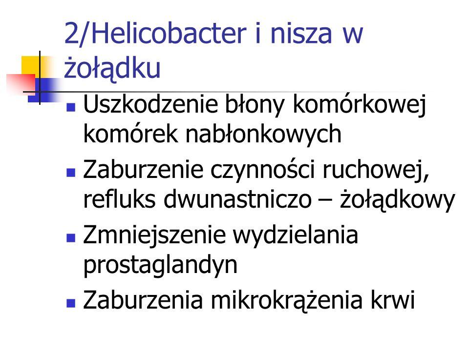 2/Helicobacter i nisza w żołądku Uszkodzenie błony komórkowej komórek nabłonkowych Zaburzenie czynności ruchowej, refluks dwunastniczo – żołądkowy Zmn