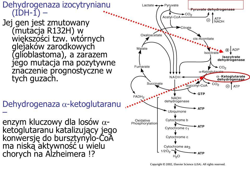 Dehydrogenaza -ketoglutaranu – enzym kluczowy dla losów - ketoglutaranu katalizujący jego konwersję do bursztynylo-CoA ma niską aktywność u wielu chor