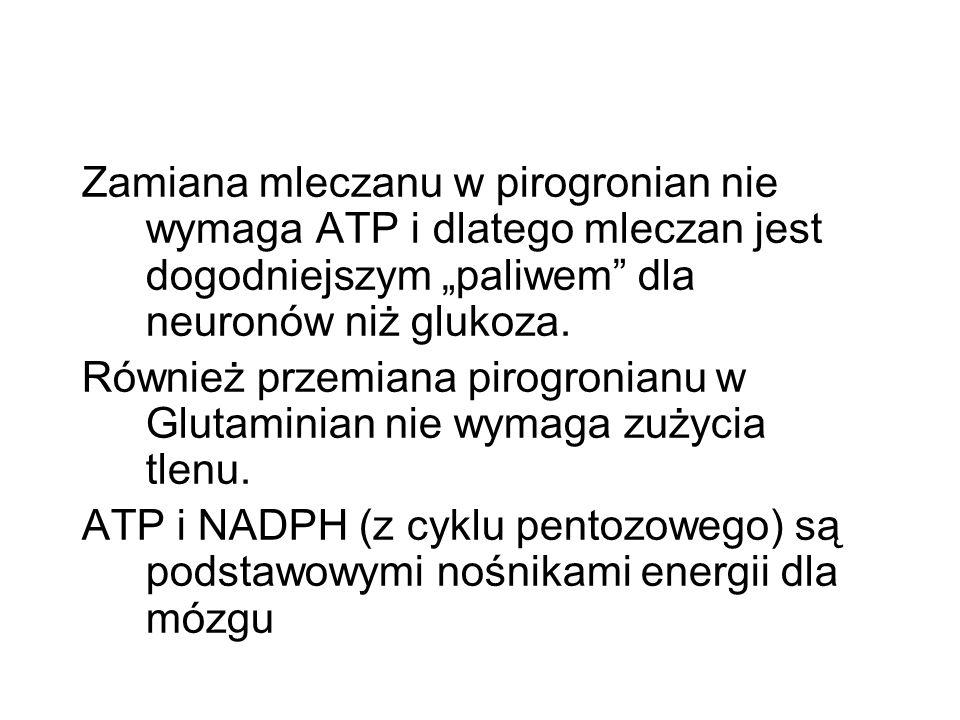 Zamiana mleczanu w pirogronian nie wymaga ATP i dlatego mleczan jest dogodniejszym paliwem dla neuronów niż glukoza. Również przemiana pirogronianu w