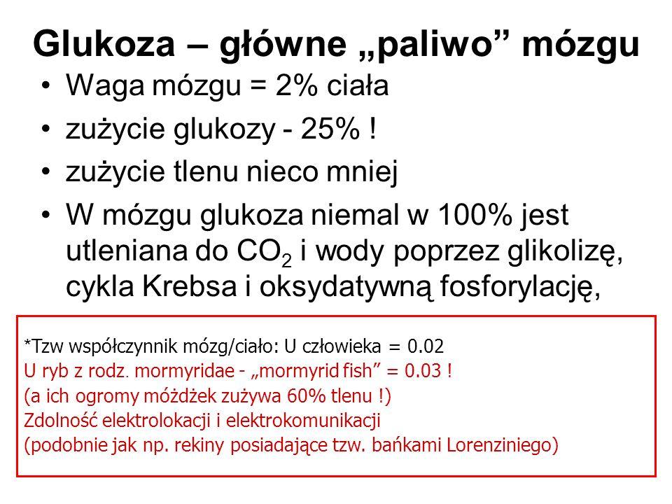 Zużycie glukozy w mózgu Różnica tętniczo-żylna poziomu glukozy dla głowy = 0,55 mmol/l (= 0,55 mol/ml) (Ide K.