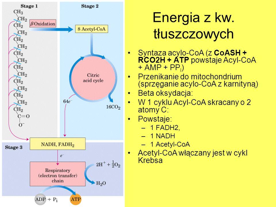 Energia z kw. tłuszczowych Syntaza acylo-CoA (z CoASH + RCO2H + ATP powstaje Acyl-CoA + AMP + PP i ) Przenikanie do mitochondrium (sprzęganie acylo-Co