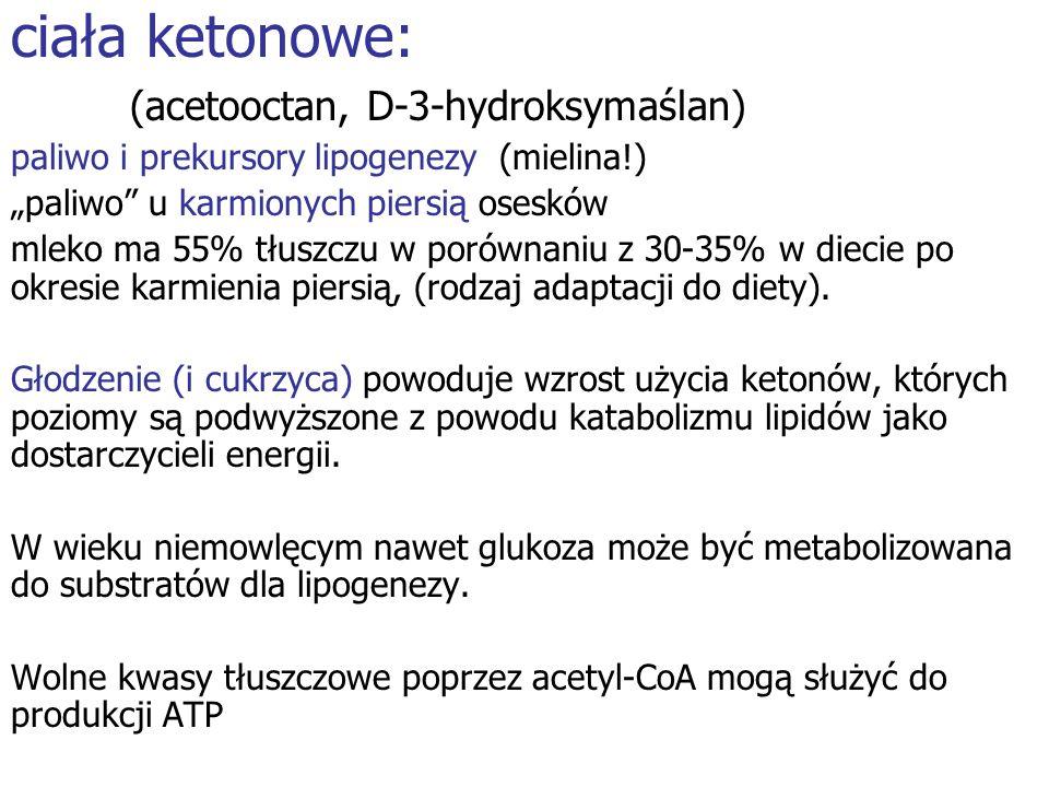 ciała ketonowe: (acetooctan, D-3-hydroksymaślan) paliwo i prekursory lipogenezy (mielina!) paliwo u karmionych piersią osesków mleko ma 55% tłuszczu w