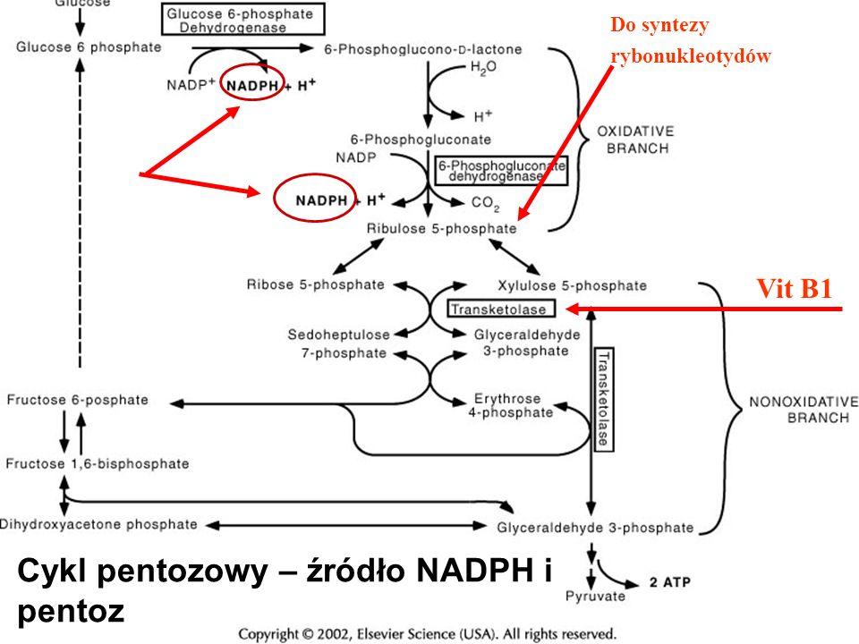 Vit B1 Do syntezy rybonukleotydów Cykl pentozowy – źródło NADPH i pentoz