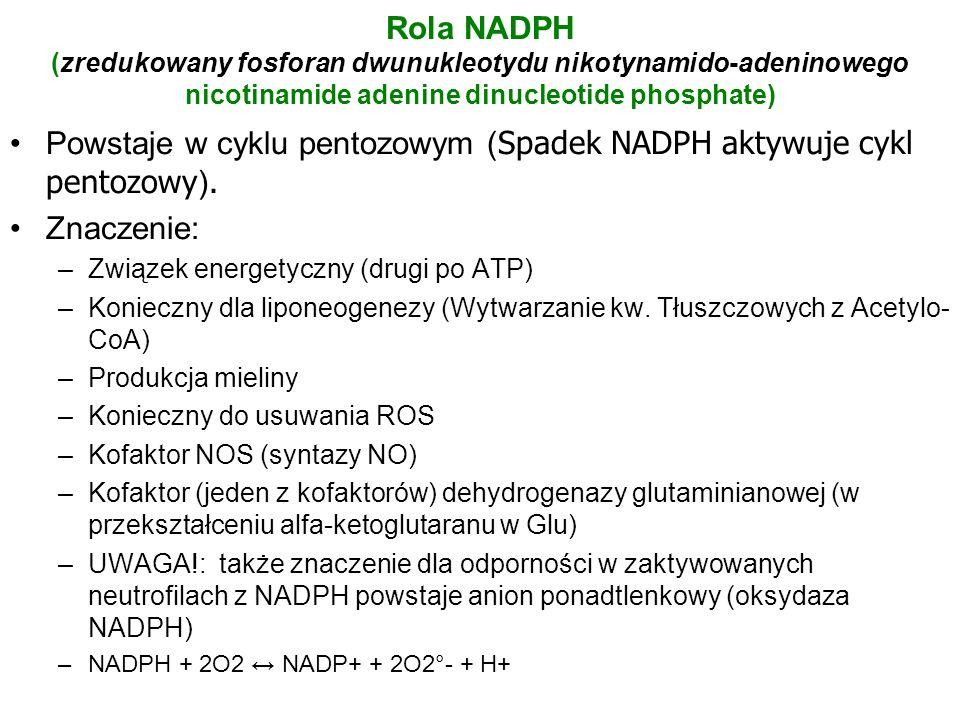 Rola NADPH (zredukowany fosforan dwunukleotydu nikotynamido-adeninowego nicotinamide adenine dinucleotide phosphate) Powstaje w cyklu pentozowym ( Spa