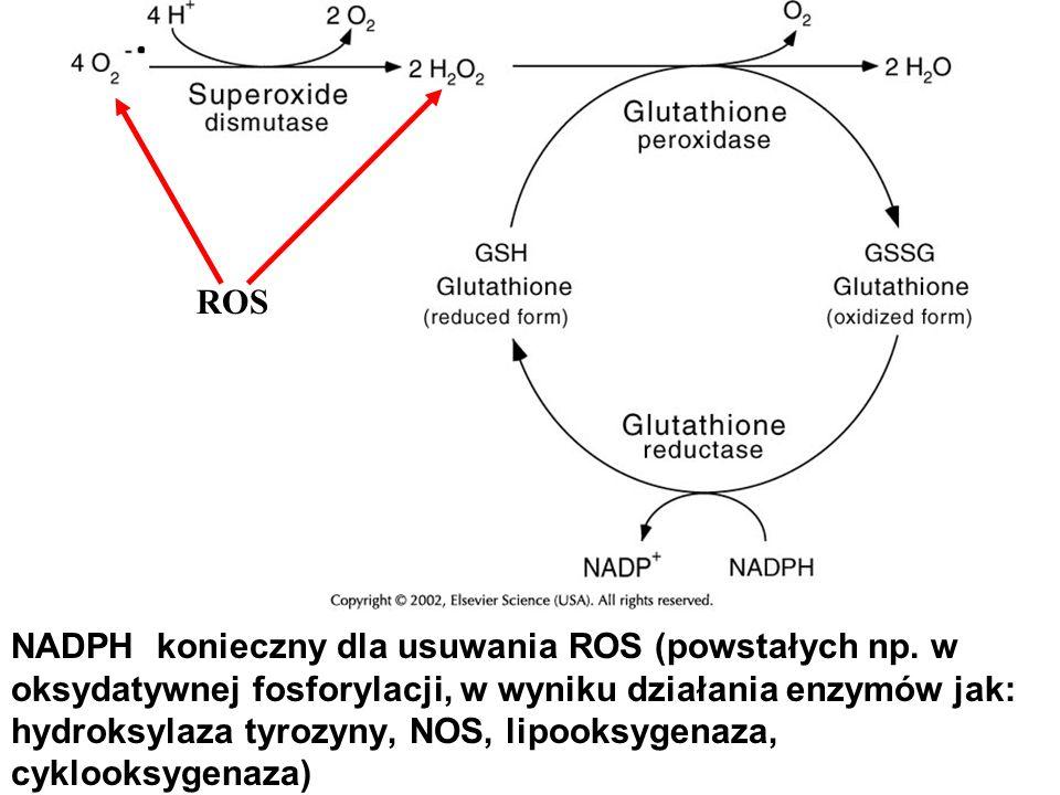 NADPH konieczny dla usuwania ROS (powstałych np. w oksydatywnej fosforylacji, w wyniku działania enzymów jak: hydroksylaza tyrozyny, NOS, lipooksygena