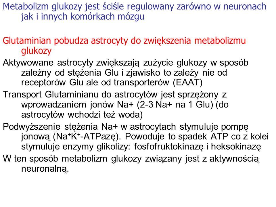 Metabolizm glukozy jest ściśle regulowany zarówno w neuronach jak i innych komórkach mózgu Glutaminian pobudza astrocyty do zwiększenia metabolizmu gl
