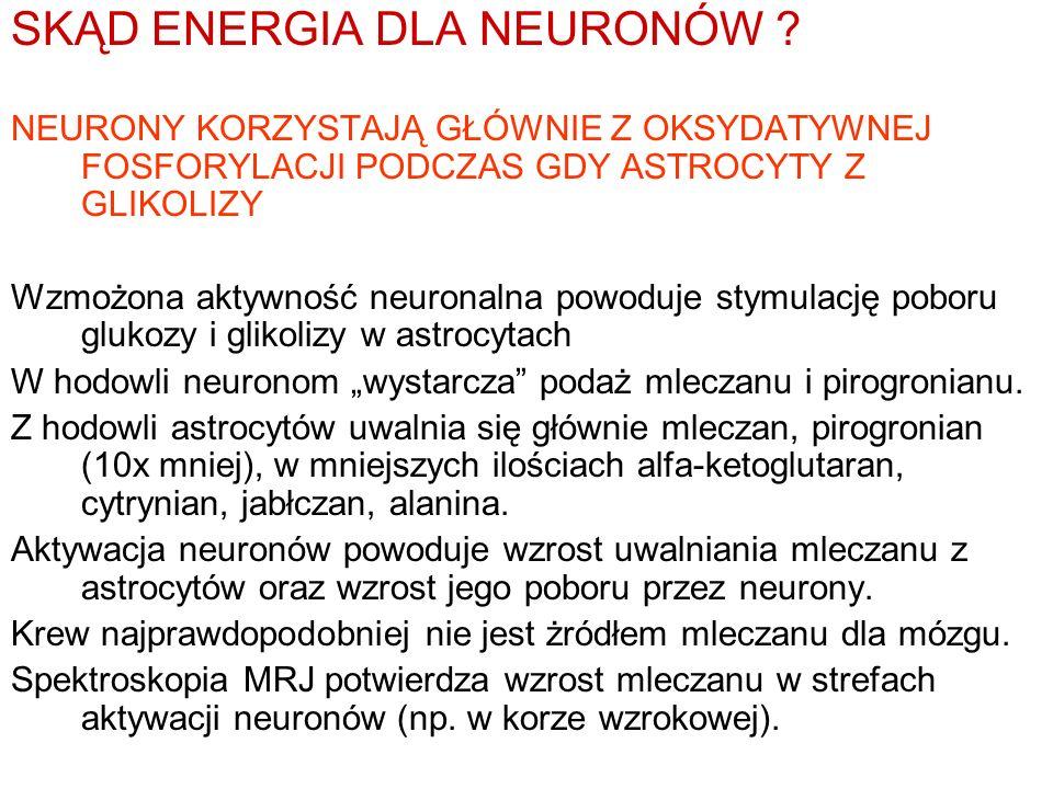 SKĄD ENERGIA DLA NEURONÓW ? NEURONY KORZYSTAJĄ GŁÓWNIE Z OKSYDATYWNEJ FOSFORYLACJI PODCZAS GDY ASTROCYTY Z GLIKOLIZY Wzmożona aktywność neuronalna pow