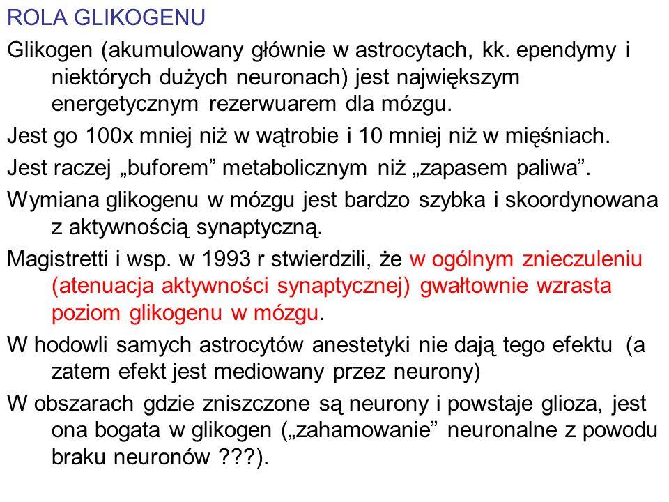 ROLA GLIKOGENU Glikogen (akumulowany głównie w astrocytach, kk. ependymy i niektórych dużych neuronach) jest największym energetycznym rezerwuarem dla
