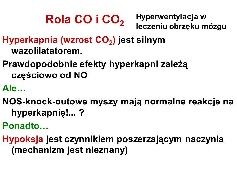 Rola CO i CO 2 Hyperkapnia (wzrost CO 2 ) jest silnym wazolilatatorem. Prawdopodobnie efekty hyperkapni zależą częściowo od NO Ale… NOS-knock-outowe m