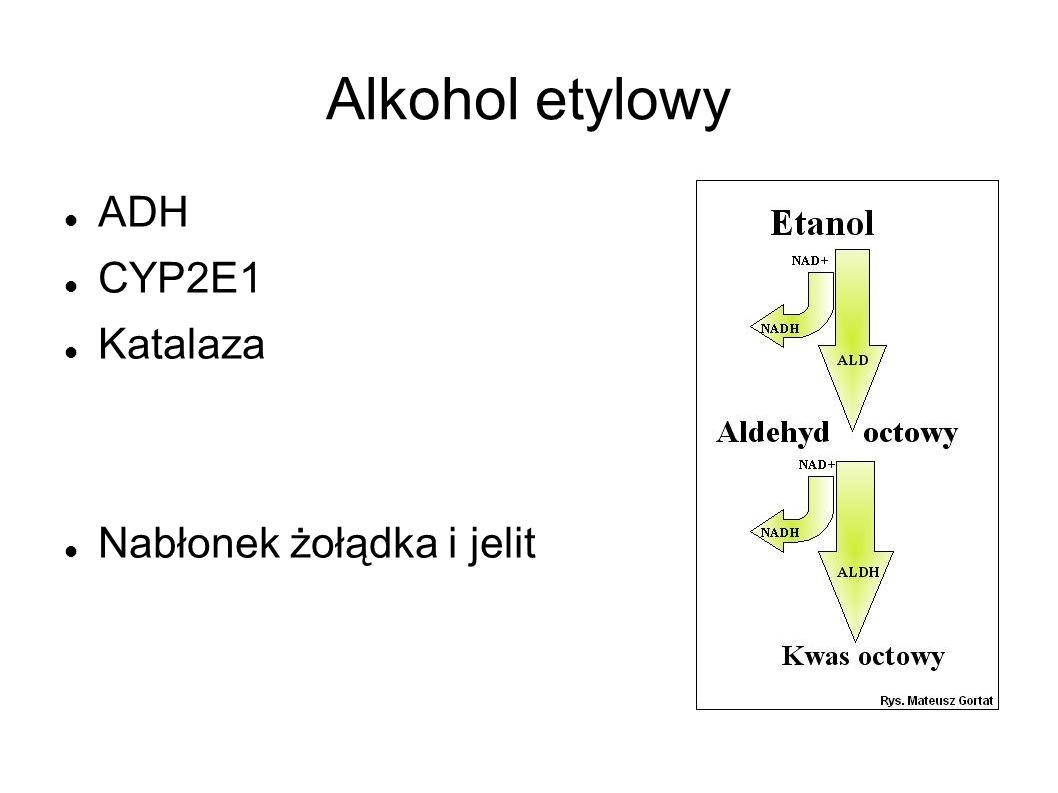 Alkohol etylowy ADH CYP2E1 Katalaza Nabłonek żołądka i jelit