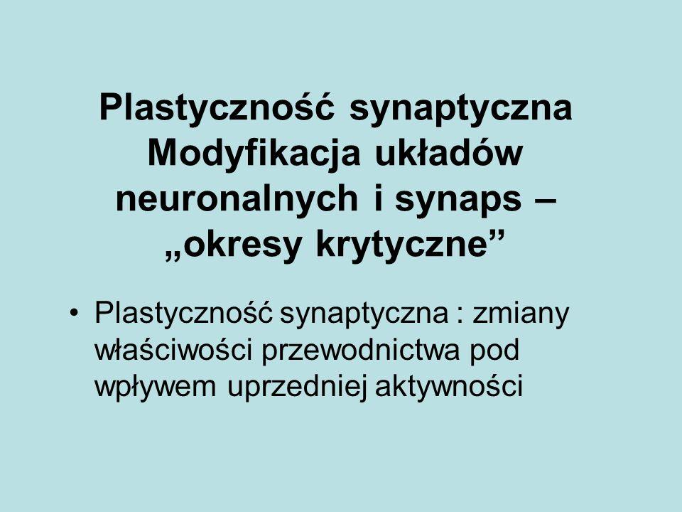Plastyczność synaptyczna Modyfikacja układów neuronalnych i synaps – okresy krytyczne Plastyczność synaptyczna : zmiany właściwości przewodnictwa pod