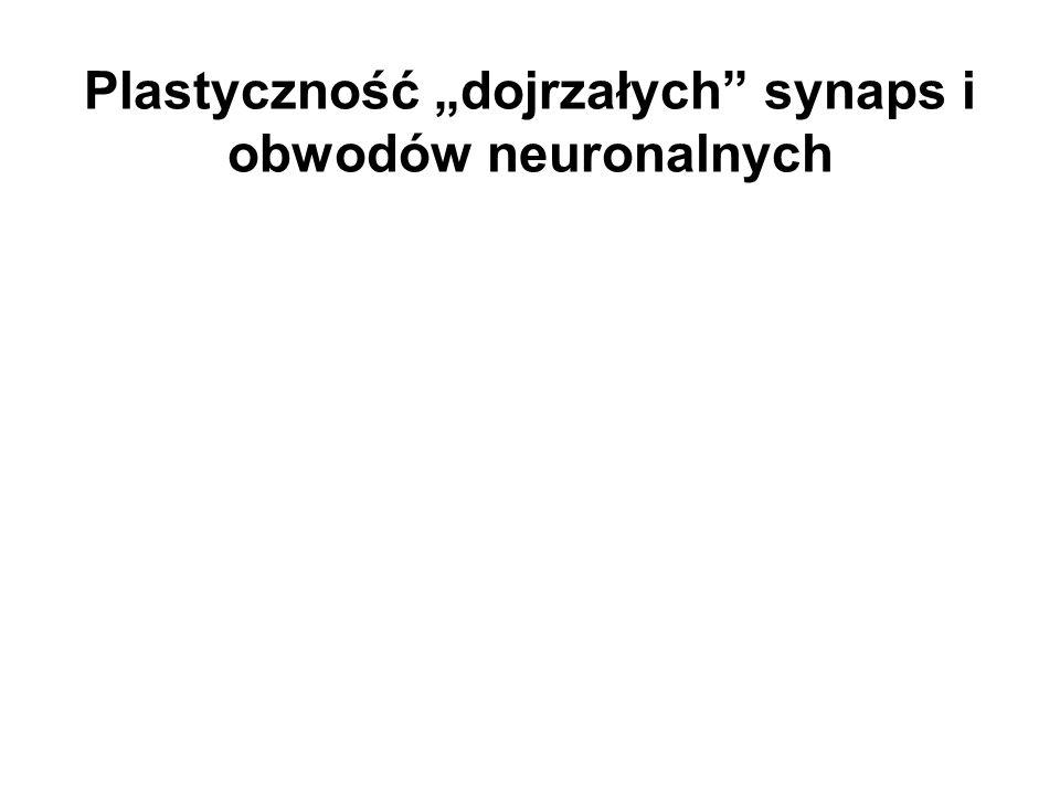 Plastyczność dojrzałych synaps i obwodów neuronalnych