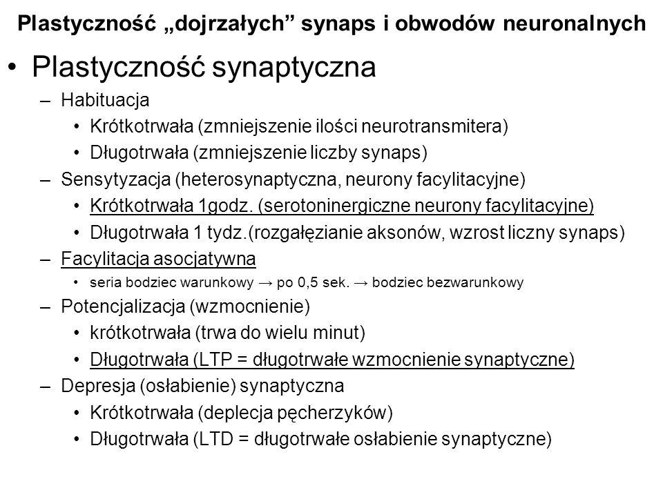 Plastyczność synaptyczna –Habituacja Krótkotrwała (zmniejszenie ilości neurotransmitera) Długotrwała (zmniejszenie liczby synaps) –Sensytyzacja (heter