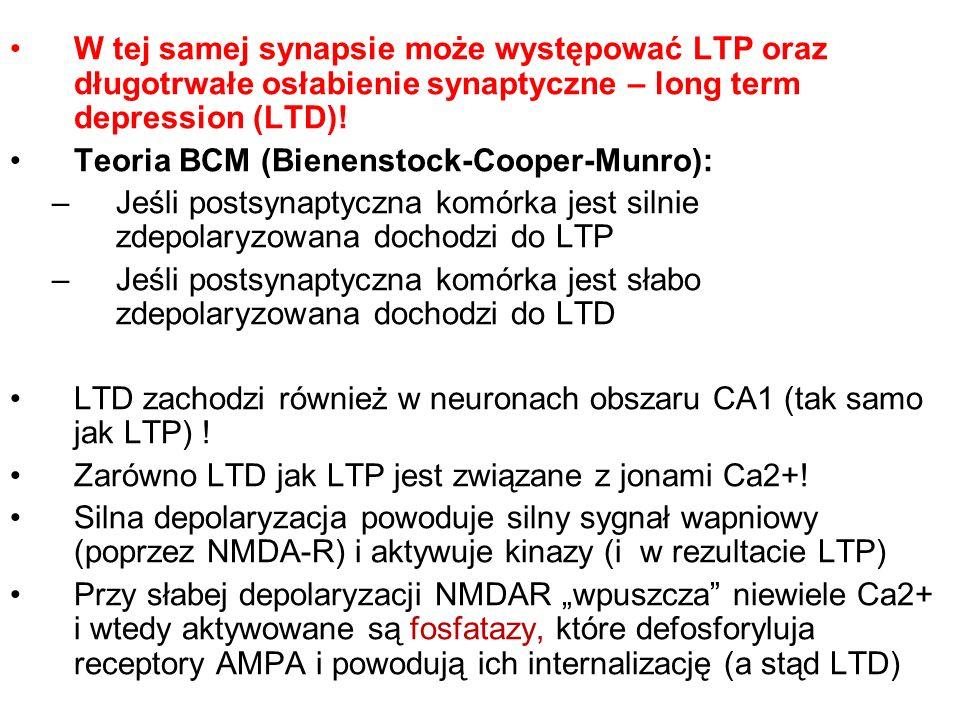 W tej samej synapsie może występować LTP oraz długotrwałe osłabienie synaptyczne – long term depression (LTD)! Teoria BCM (Bienenstock-Cooper-Munro):