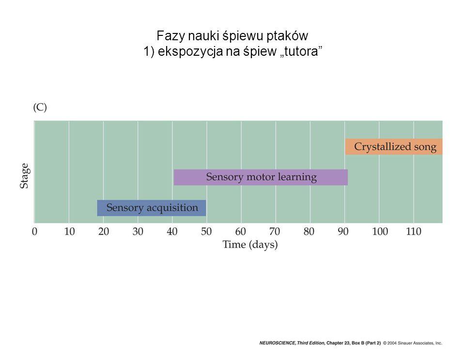 Dalsze doprecyzowanie połączeń projekcyjnych drogi wzrokowej następuje pod wpływem bodźców wzrokowych.