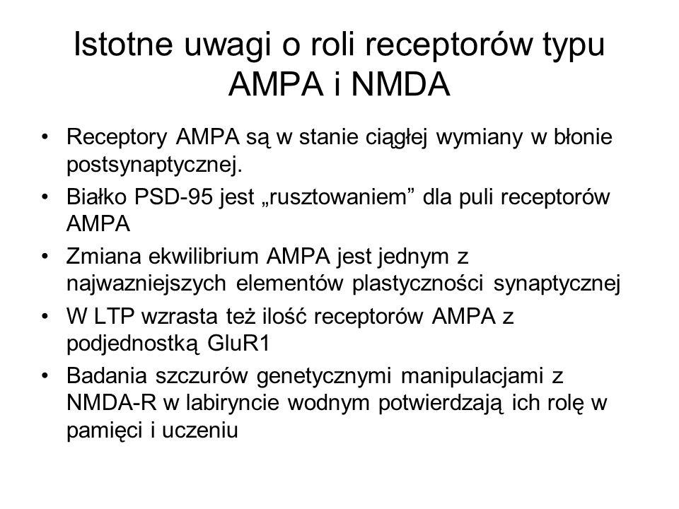 Istotne uwagi o roli receptorów typu AMPA i NMDA Receptory AMPA są w stanie ciągłej wymiany w błonie postsynaptycznej. Białko PSD-95 jest rusztowaniem