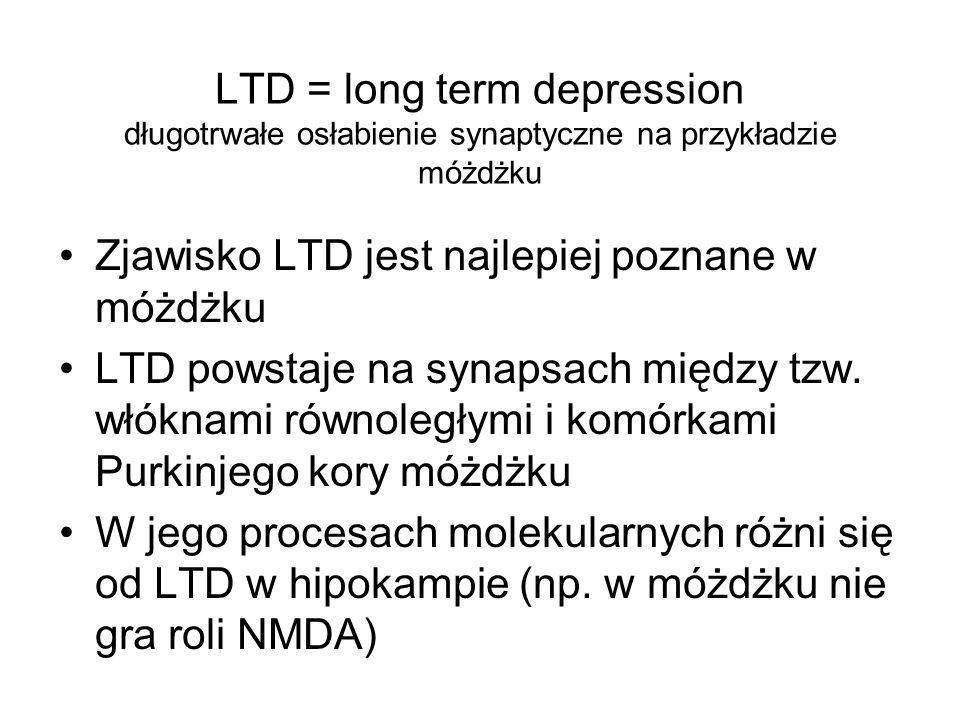 LTD = long term depression długotrwałe osłabienie synaptyczne na przykładzie móżdżku Zjawisko LTD jest najlepiej poznane w móżdżku LTD powstaje na syn
