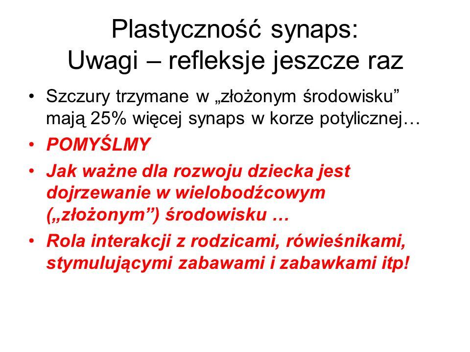 Plastyczność synaps: Uwagi – refleksje jeszcze raz Szczury trzymane w złożonym środowisku mają 25% więcej synaps w korze potylicznej… POMYŚLMY Jak waż