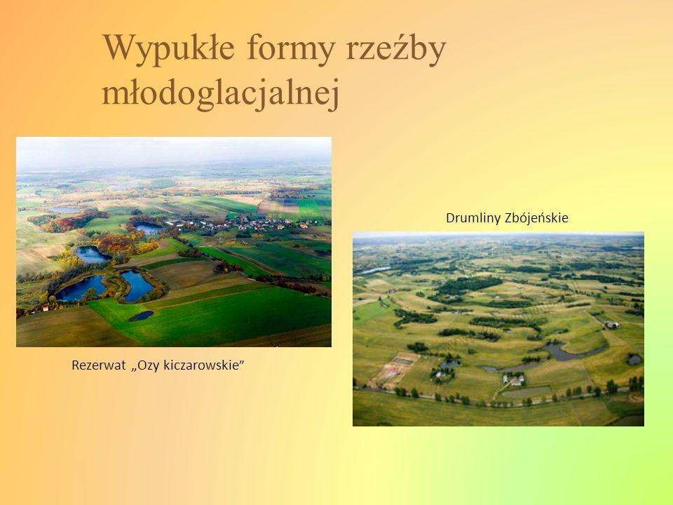 Wypukłe formy rzeźby młodoglacjalnej Rezerwat Ozy kiczarowskie Drumliny Zbójeńskie
