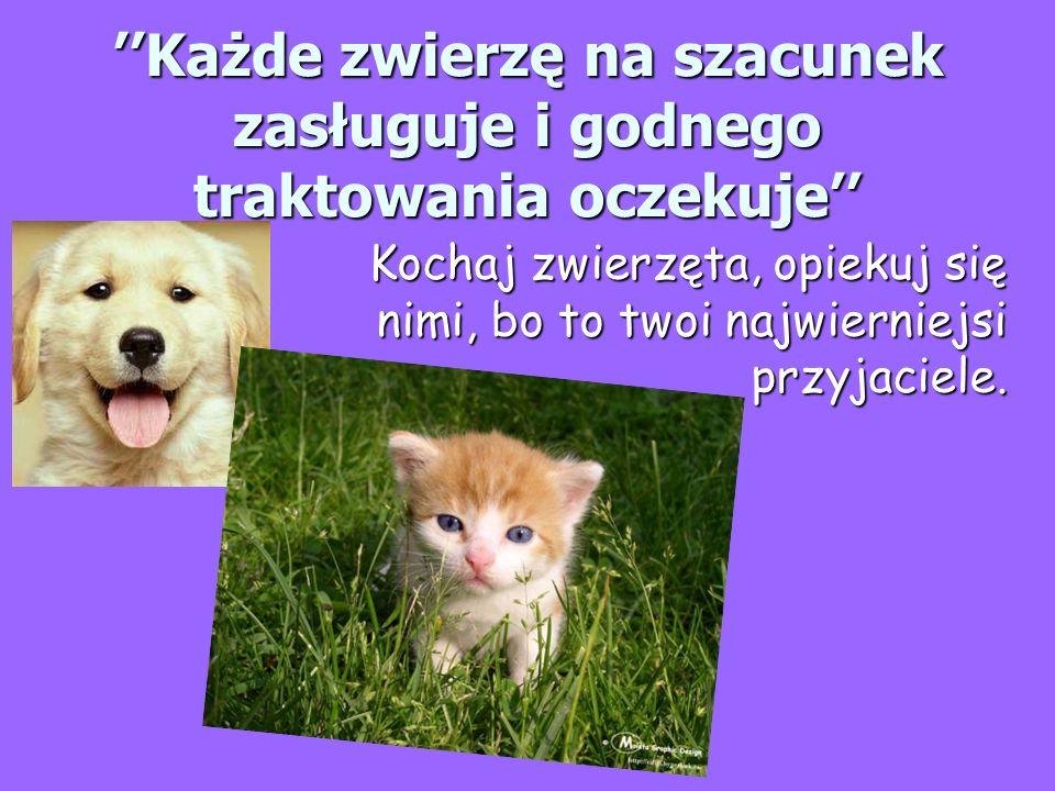 Każde zwierzę na szacunek zasługuje i godnego traktowania oczekuje Kochaj zwierzęta, opiekuj się nimi, bo to twoi najwierniejsi przyjaciele.