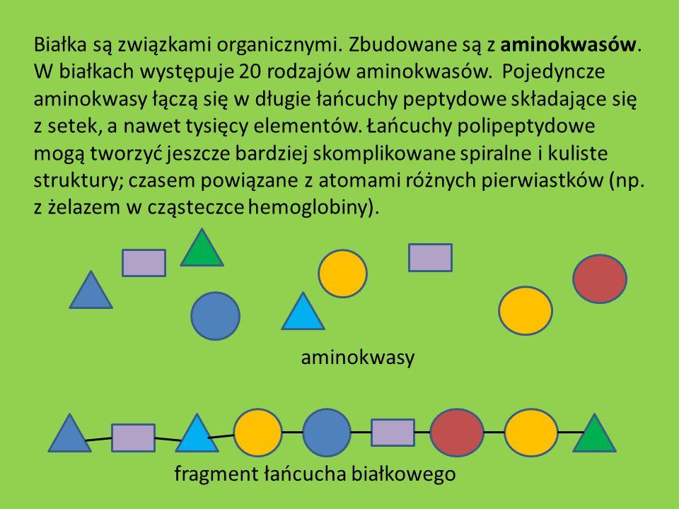 Białka są związkami organicznymi. Zbudowane są z aminokwasów. W białkach występuje 20 rodzajów aminokwasów. Pojedyncze aminokwasy łączą się w długie ł