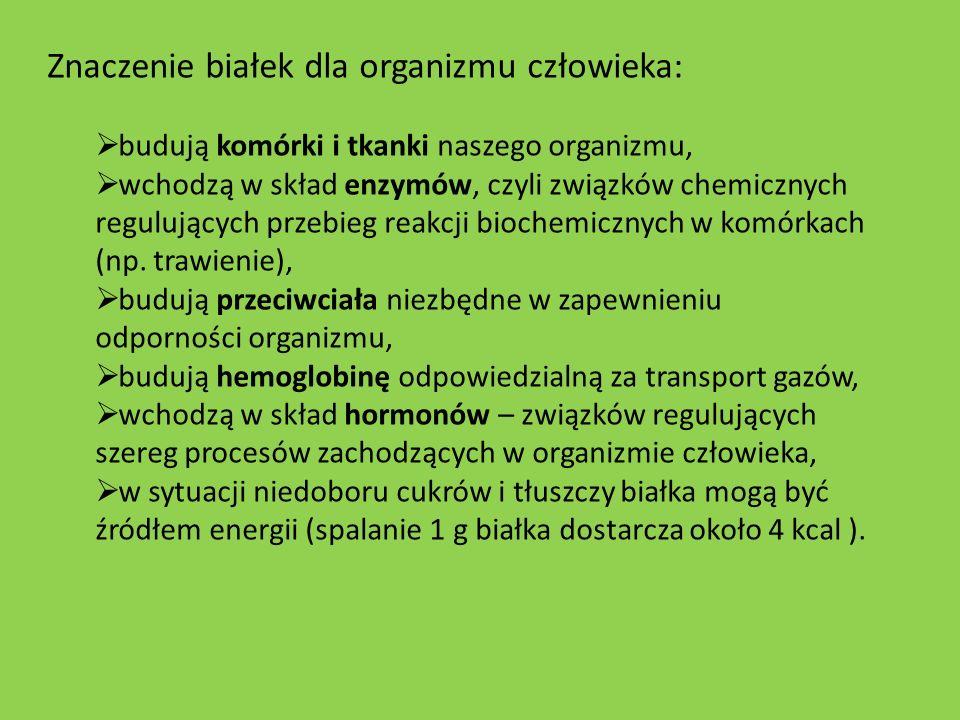 Znaczenie białek dla organizmu człowieka: budują komórki i tkanki naszego organizmu, wchodzą w skład enzymów, czyli związków chemicznych regulujących