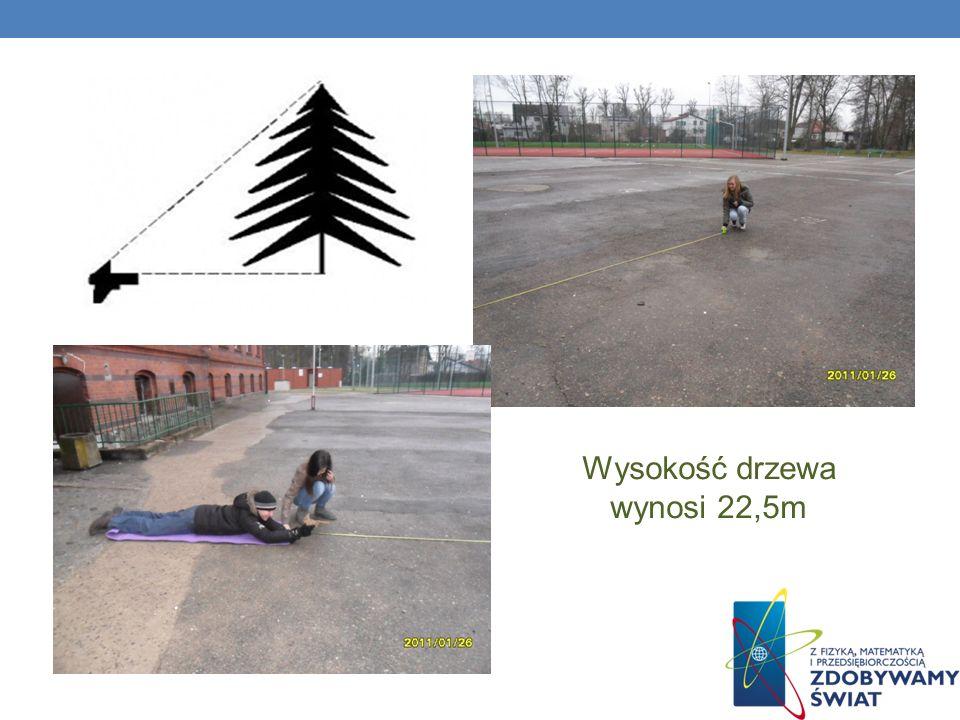 Wysokość drzewa wynosi 22,5m