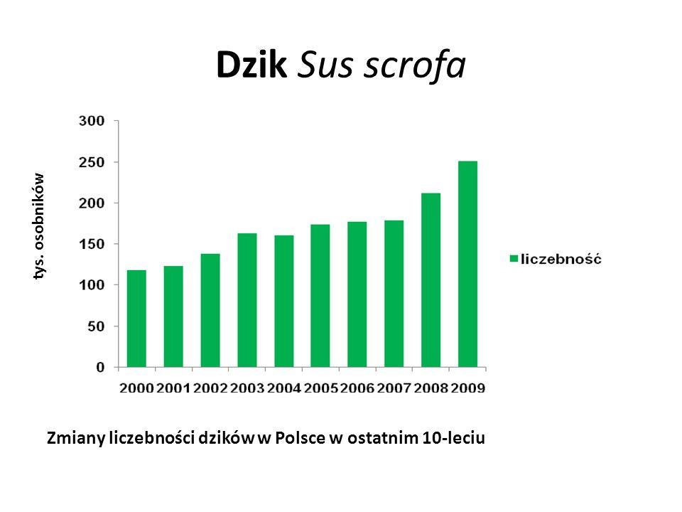 Dzik Sus scrofa Zmiany liczebności dzików w Polsce w ostatnim 10-leciu tys. osobników