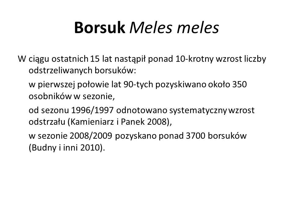 Borsuk Meles meles W ciągu ostatnich 15 lat nastąpił ponad 10-krotny wzrost liczby odstrzeliwanych borsuków: w pierwszej połowie lat 90-tych pozyskiwa