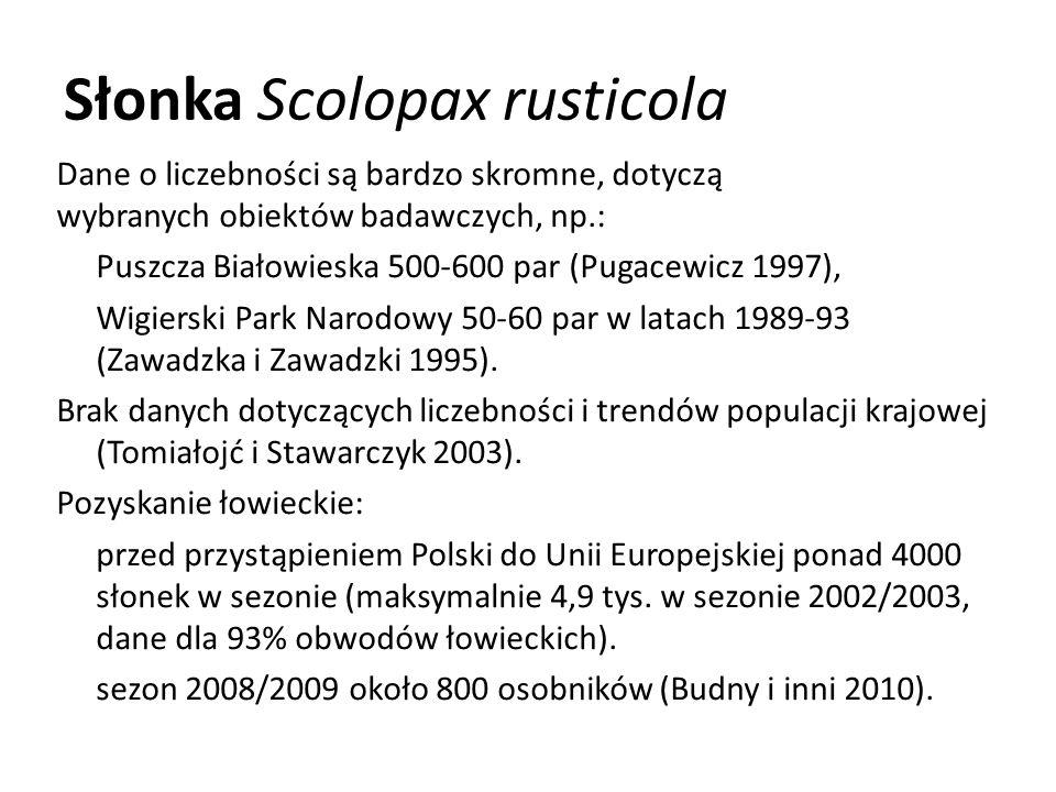 Słonka Scolopax rusticola Dane o liczebności są bardzo skromne, dotyczą wybranych obiektów badawczych, np.: Puszcza Białowieska 500-600 par (Pugacewic