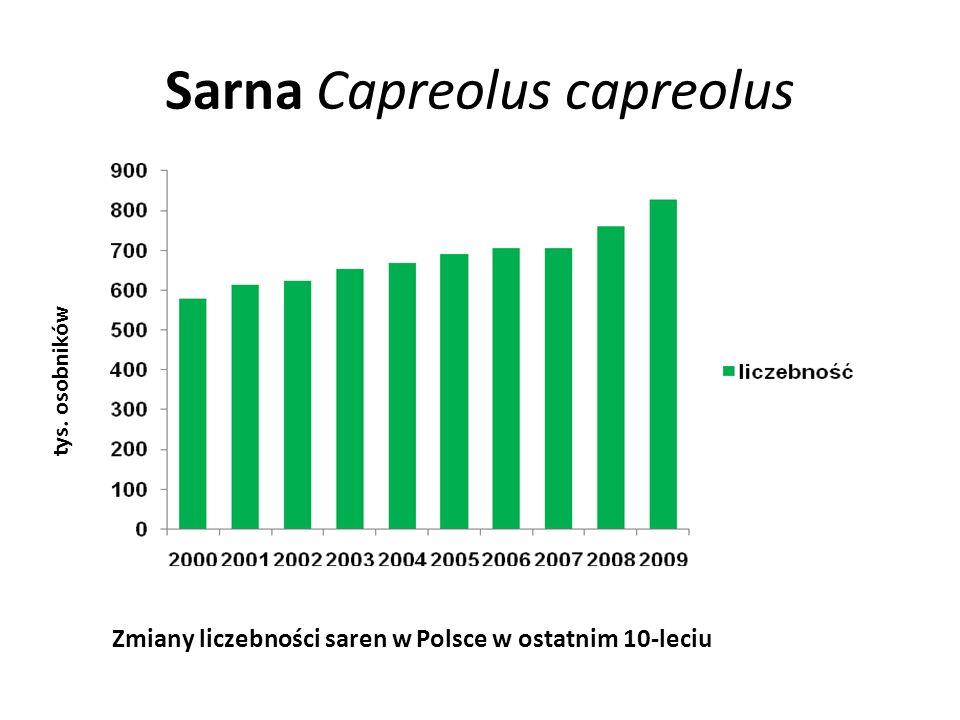 Sarna Capreolus capreolus tys.