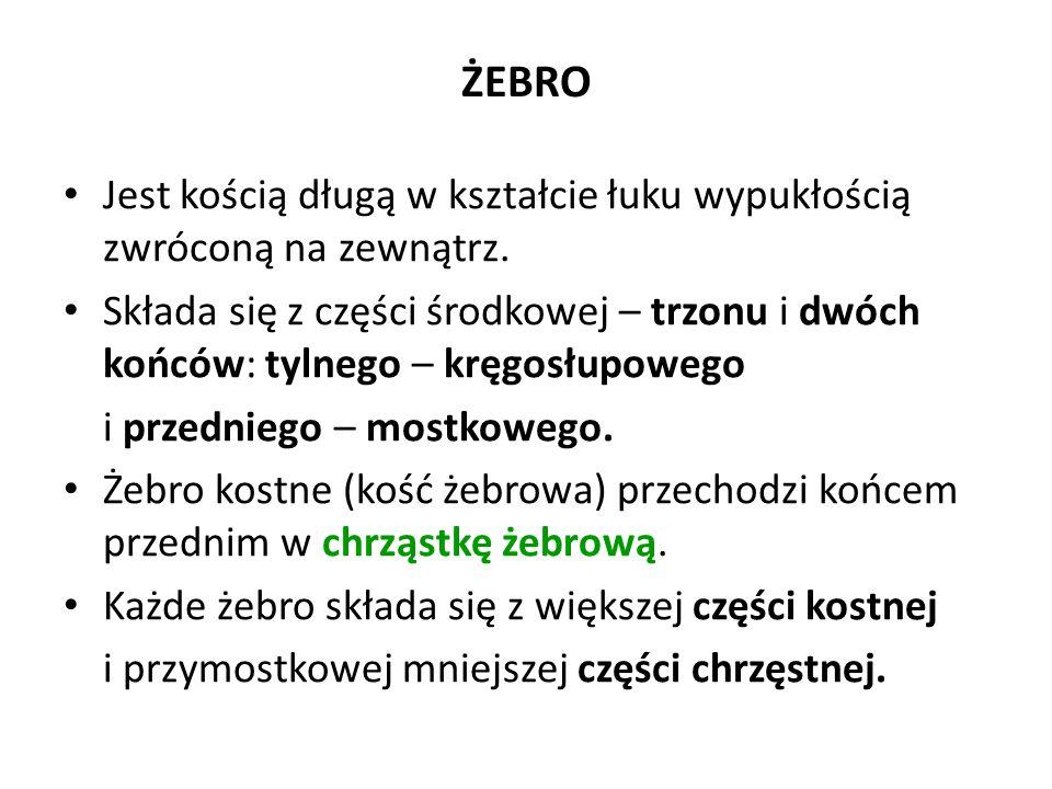 ŻEBRO c.d.