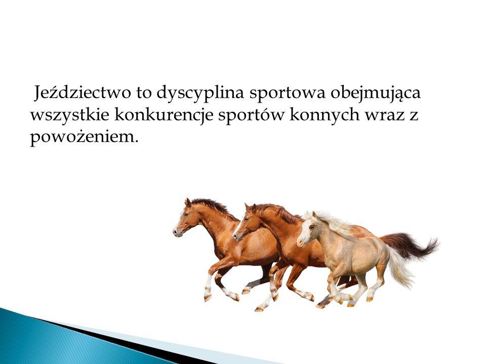 Do sportów konnych, uznanych przez Międzynarodową Federację Jeździecką, zaliczamy: ujeżdżenie skoki przez przeszkody Wszechstronny Konkurs Konia Wierzchowego powożenie woltyżerkę rajdy długodystansowe reining